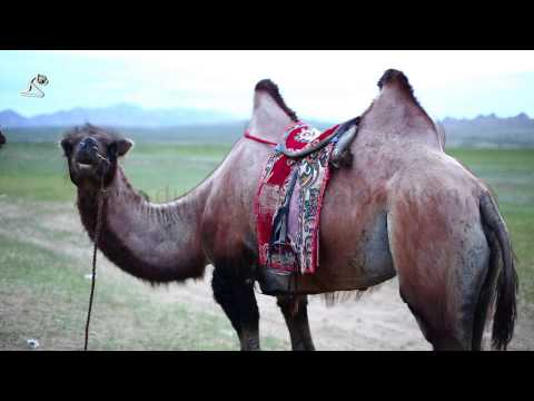 Stock Footages: Mongolia, Central Asia, Around Orkhon Valley