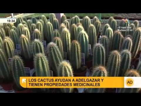 Los cactus y sus propiedades - YouTube