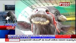 Buffalo Farming Success Story From Mandapeta | Mahaa Raithu Anna