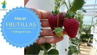 Vivero Villa Monica #2 Frutillas Hidroponicas en el Tigre!
