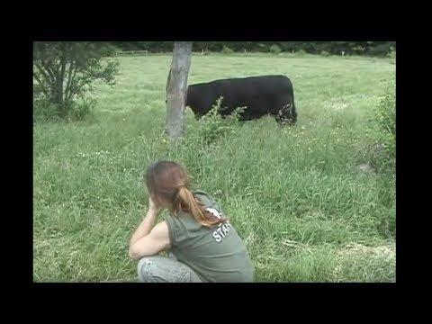 Reel Life at Farm Sanctuary – Ep. 1: Pasture Rotation