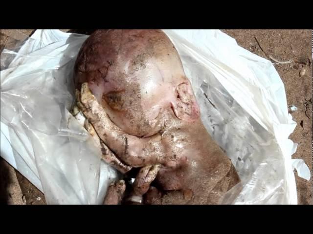 El misterioso caso del cerdito con forma de bebe