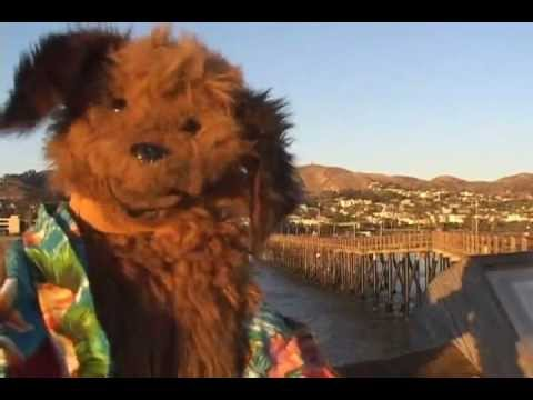 Shaggy Dog Reports from the Ventura Pier