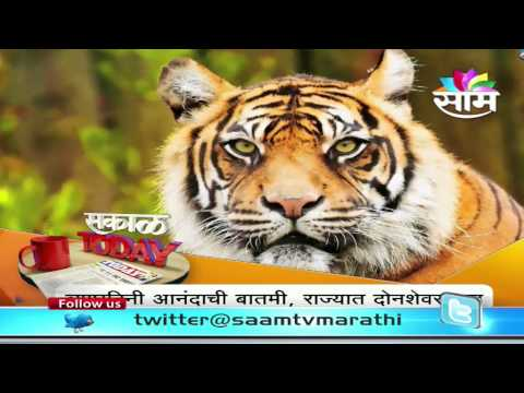 On World Tiger day , Maharashtra crosses 200th mark