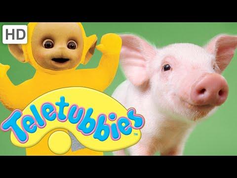 Teletubbies: Piglets - Hd Video video