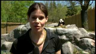 CBC News Toronto at 5: Thursday May 16, 2013