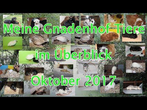 Meine Gnadenhof Tiere im Überblick Oktober 2017