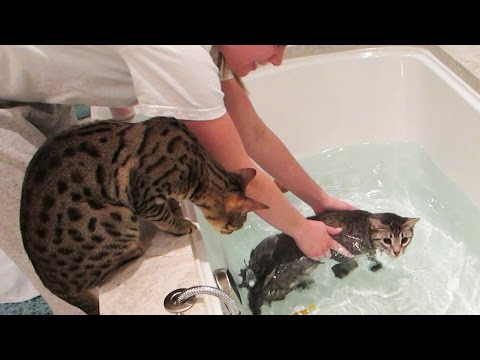 Kitty Swimming Lessons video