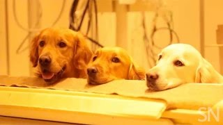 How dogs process speech | Science News
