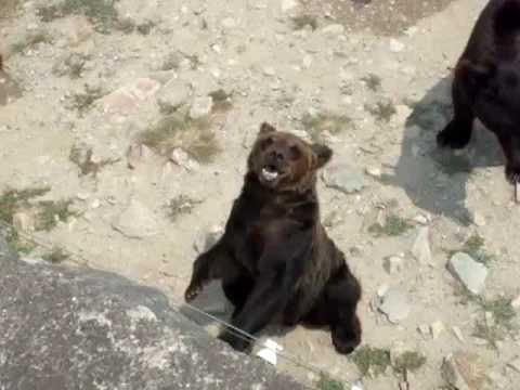姫センの熊さん