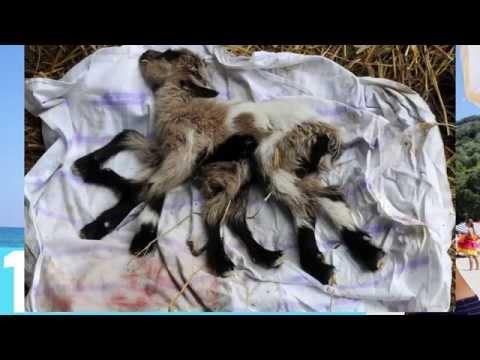 Top 10 Mutaciones y Nacimientos Bizarros en Animales