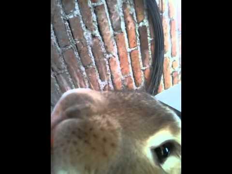 big bug bunny youtube