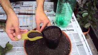 Reproducción de plantas por gajos o esquejes