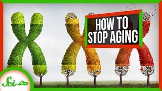 Why We Age - And How We Can Stop It