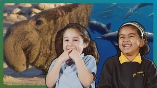 Children React To Strange Animals - Real Happiness Project - Earth Unplugged