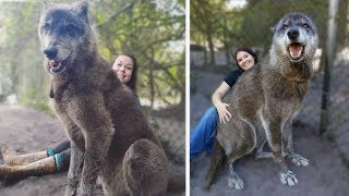 15 Wolves You Won't BELIEVE Actually Exist!