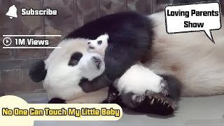 Panda Mom: No One Can Touch My Little Baby | iPanda