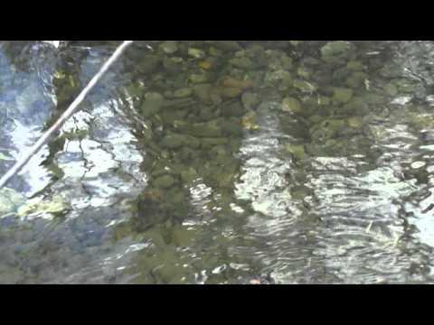 рыбалка на реке осетр в ливадии