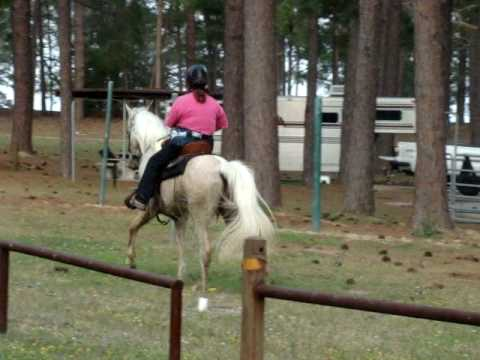 Beautiful dappled palomino speed racking Tennessee Walking Horse gelding for sale *SOLD*