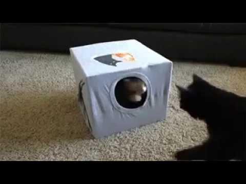 Домик для кота из коробки и футболки своими руками 7