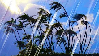 Rain and Wind Sounds for Sleeping or Studying | Rainstorm White Noise 10 Hours