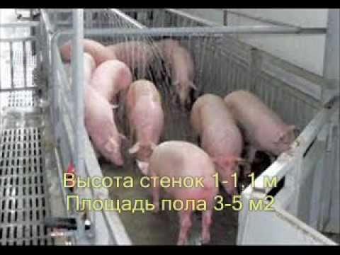 Как Дома Содержать Свиней Результат 120 кг за 6 мес 3/20
