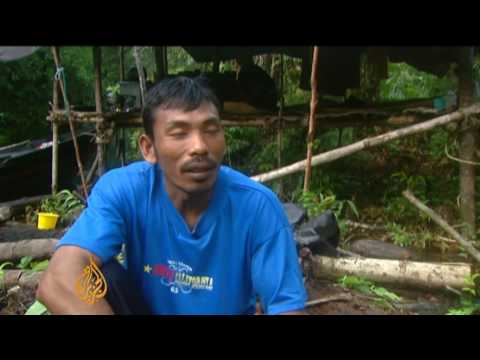 Preserving Indonesia's forests