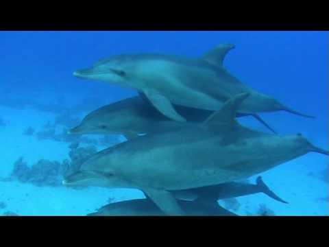 safaga, dolphins