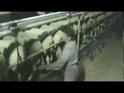 Πρότυπη Κτηνοτροφία στην Ελάτη Κοζάνης Music Videos