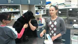 K-Laser Therapy For Your Pet's Chronic Pain & Healing!