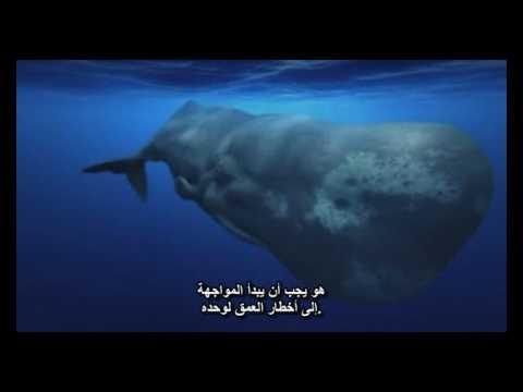اسرار المحيط, حوت العنبر,  الحلقة 1 (مترجم) الجزء الرابع