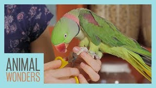 Keeping Your Parrot Clean | Bird Hygiene