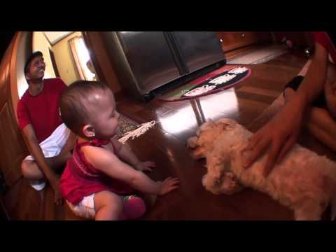 Filipino Baby loves Dog