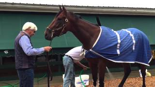 Preakness Stakes: American Pharoah Morning After