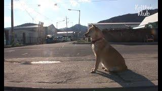 Dog Waits For Her Dead Husband | Kritter Klub