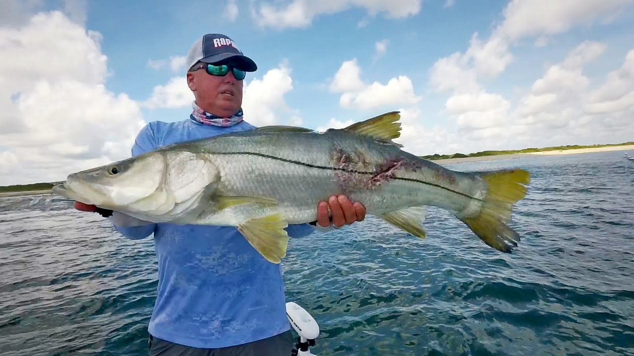 Monster inlet snook fishing bay for Snook fishing lures