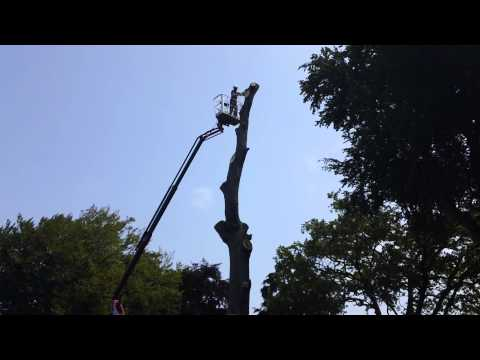 Tree dismantling services | Dublin Tree service | Glasnevin