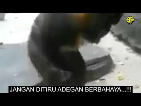 Monkey Handjob thumbnail