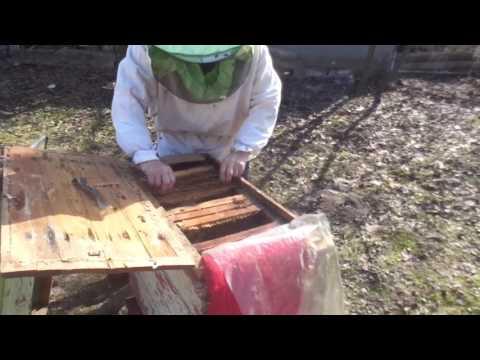 народные приманки роев пчел