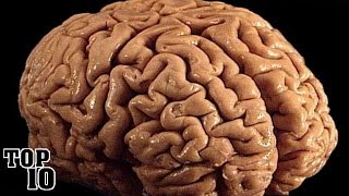 Top 10 Shocking Facts About The Human Brain - Part 2