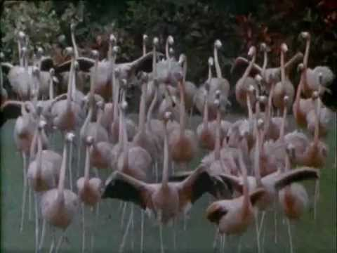 Jan Hammer - Miami Vice Theme