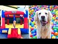 DOG GETS BOUNCE HOUSE FOR FOURTH BIRTHDAY