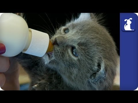 How to Bottle Feed Kittens