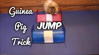 Guinea Pig Trick: Jump