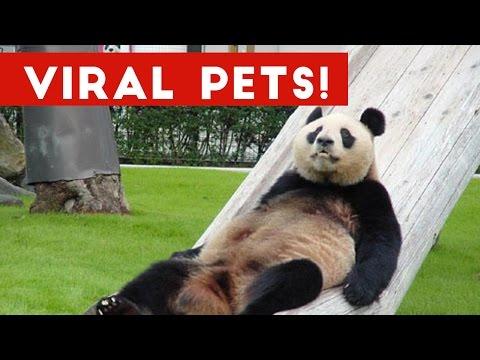 Funniest Viral Pet & Animal Videos Weekly Compilation December 2016   Funny Pet Videos
