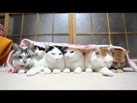 6 Котов