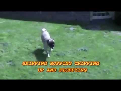 Black Dog Video Song