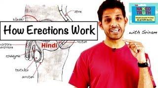 How Erections Work Hindi