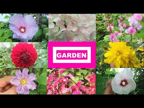 🌹Garden Flowers and Vegetables August 2015 Vlog🌹