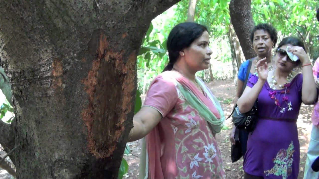 Spice Farm Goa Goa 9/9 Ponda Spice
